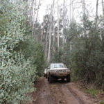4WD track through Australian bush