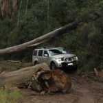 4x4 passing fallen trees on 4WD track